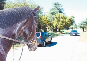 Traffic slows down for horses in the GEKCO conservancy.
