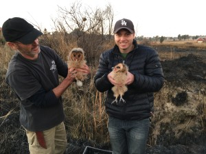 Tyrone Mckendry (GEKCO) and Brendan Murray (Owl Rescue Centre) releasing the two chicks that escaped the fire.