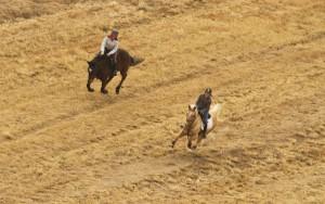 Horses Running 3