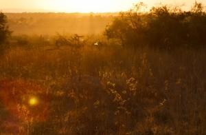 Sunset 3 (2)